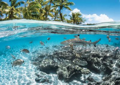 Entre terre et mer à Fakarava ©GregLecoeur
