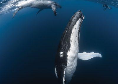 invitation-au-voyage-faune-baleine-baleineau-tahiti-e-tahiti-travel