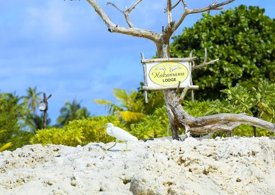 pension-hakamanu-oiseau-e-tahiti-travel