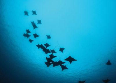 sejour-dive-plongee-les-plus-beaux-spots-de-plongee-polynesie-e-tahiti-travel-1