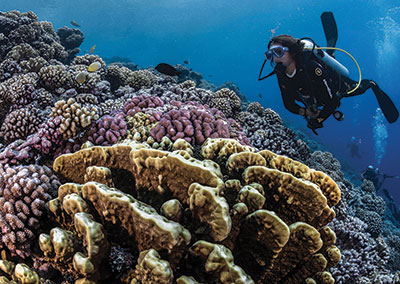 The Ultimate Dives – Society & Tuamotus Islands