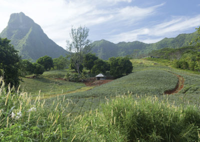 © Moorea - Tahiti Tourisme