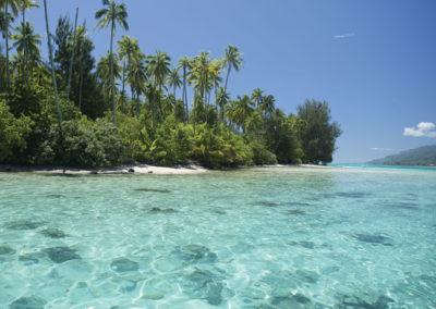 © Tahiti trip fishing