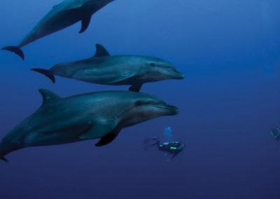 diapo1-excursion-sortie-dauphins-tahiti-e-tahiti-travel