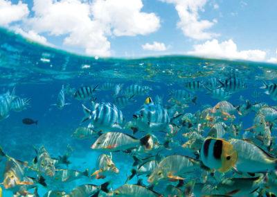 diapo2-excursion-plongee-sous-marine-tikahau-e-tahiti-travel