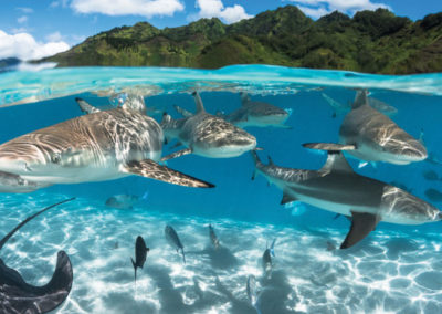 diapo4-excursion-rencontre-avec-raies-requins-bora-e-tahiti-travel