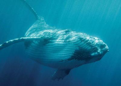 diapo4-excursion-sortie-baleine-tahiti-e-tahiti-travel
