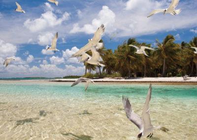 diapo5-excursion-plongee-sous-marine-tikahau-e-tahiti-travel