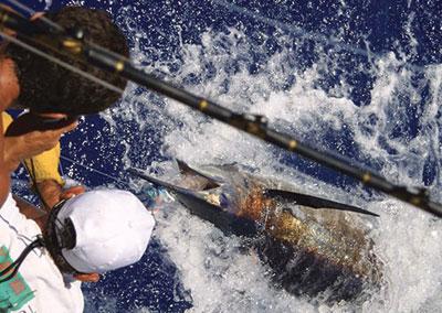 Pêche au gros sur l'île de Huahine