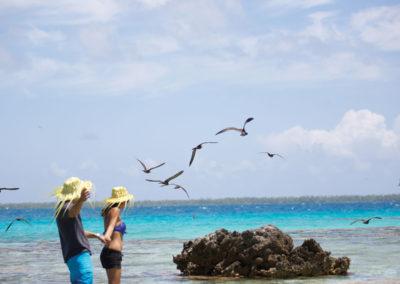 Iles des oiseaux - Tikehau