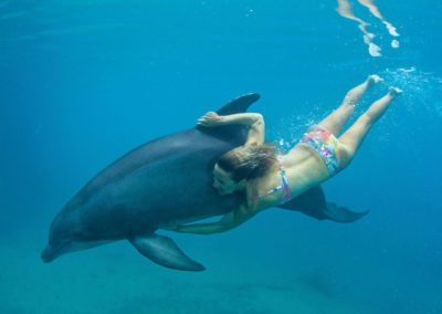 © Moorea Dolphin Center - Rodolphe Holler