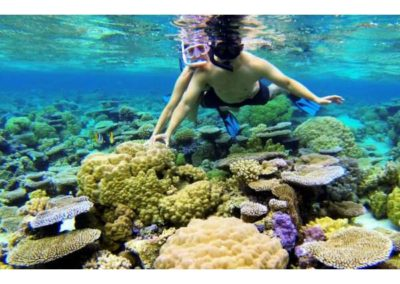 Pure snorkeling Ecotour in the lagoon