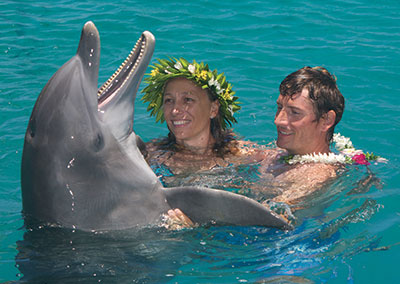 Meet dolphins in the Island of Moorea