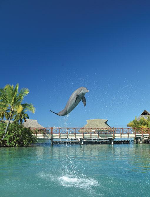 Tahiti rencontre.pf