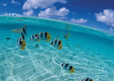 diapo1-excursion-safari-jet-raies-requins-bora-e-tahiti-travel