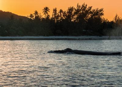 séjours-plongées-exception-baleine-polynesie-e-tahiti-travel