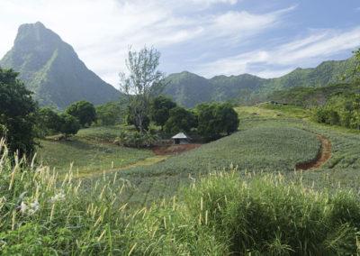 Moorea @ Tahiti Tourisme