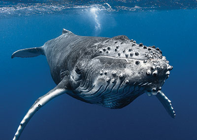 Top Dives & encounters with Whales!