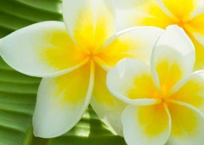 1501166964Fleur_de_Tahiti_txRJbaM.wide_article