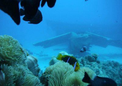 tahiti-whale-dolphin-snorkeling-cruise-lagoon-paradise