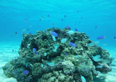 Tahiti Lagoon Paradise