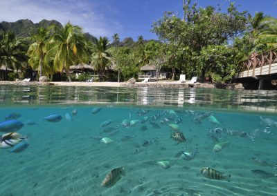 Intercontinental Moorea Resort Spah 5782894771 O