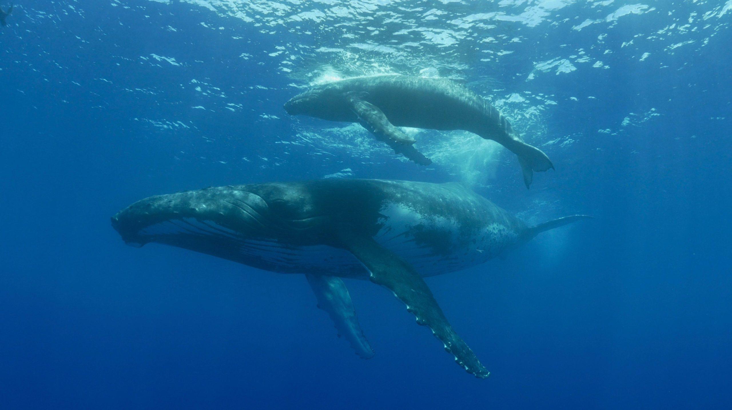 oceania-etahiti-travel